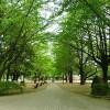 1K Apartment to Rent in Itabashi-ku Park