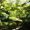 1LDK Apartment to Rent in Minato-ku Park