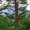2LDK マンション 南都留郡富士河口湖町 View / Scenery