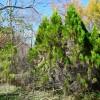 3LDK House to Buy in Kitasaku-gun Karuizawa-machi Garden