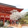 4LDK House to Buy in Kyoto-shi Kita-ku Landmark