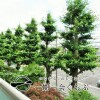 3LDK Apartment to Buy in Nakano-ku View / Scenery