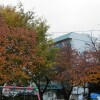 Shared Guesthouse to Rent in Amagasaki-shi Park