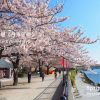 Whole Building Apartment to Buy in Sumida-ku Park