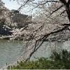 在千代田區購買2SLDK 公寓大廈的房產 公園