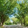 在世田谷区购买2LDK 独栋住宅的 公园