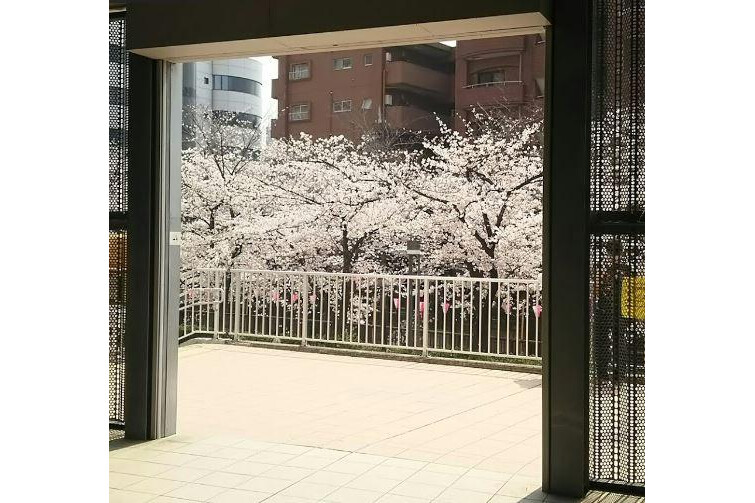 Whole Building Apartment to Buy in Meguro-ku Park
