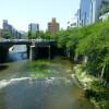 在豊島區內租賃1R 公寓大廈 的房產 海,河