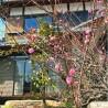 Whole Building House to Buy in Kyoto-shi Ukyo-ku Interior