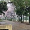 在名古屋市名東区购买楼房(整栋) 公寓大厦的 公园