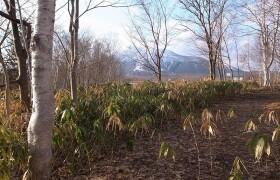 虻田郡ニセコ町 曽我 土地 土地